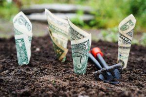Dollares plantados